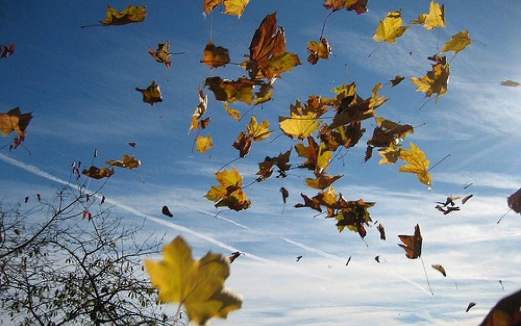 Symbolique du souffle : feuilles dans le vent